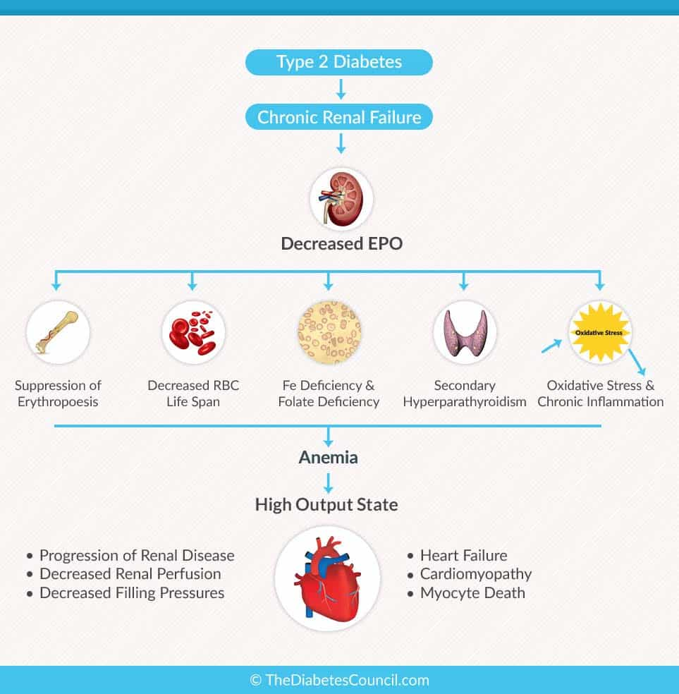 The Number One Cause Of Anemia In People With Diabetes Is Kidney Disease Red Blood Cell Production Requires A Hormone Called Erythropoietin From